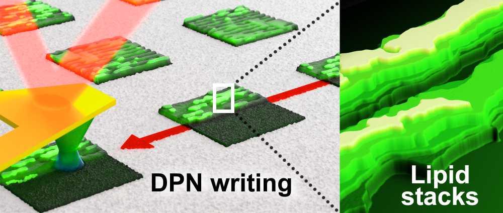 Metasens_Lipid DPN